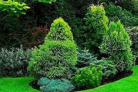 autumn gardening3